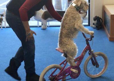 Muri rides a bike
